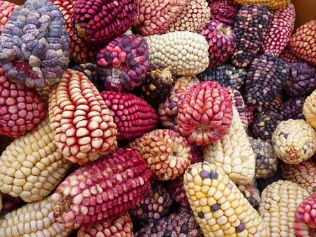 Ernährungssouveränität und Degrowth